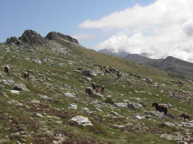 Primeres pastures a Rojà