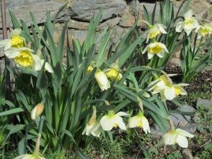 Les flors que vénen del fred, nascudes al mig de la neu