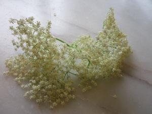 Flor de saüc
