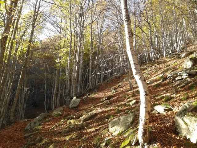 Llums, aormes i textures... del bosc al plat!